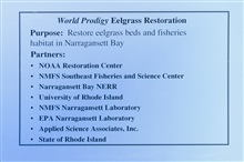 A slide describing the purpose of the eelgrass restoration and its partners. InJune 1996 NOAA scientists transplanted 7000 eelgrass plants from Charlestown Pond to ten locations in Narragansett Bay. The project team returned thefollowing September an