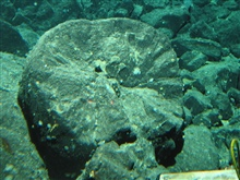 Gulf of Alaska Expedition 2004. A cross sectional view through a fracturedpillow basalt. The outer curved surface is the chilled rind, and the wedgesthat radiate from the center are fractures caused by rapid cooling of moltenlava in the cold seawater