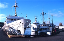 The RAINIER sits peacefully alongside the NOAA Ships JOHN N. COBB, MILLERFREEMAN, AND FAIRWEATHER at NOAA's Pacific Marine Center.