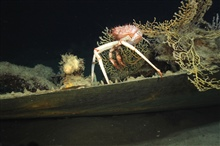 The Green Lantern Wreck, unknown wreck named for lantern artifact.Spiney Crabs crawled all over the wrecksite.
