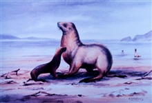 Water color by Edward Wilson of seal.  Wilson was a member of the ill-fatedRobert Falcon Scott expedition.