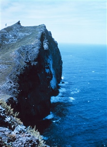 The cliffs with an albatross passing by.