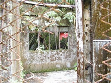 Overgrown and deteriorating prison walls at Isla Gorgona.