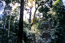 Part of the Costa Rican rain forest at the Carara Biological Reserve.