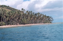Reef line and palm trees in a secluded bay