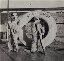 The ship's mascots on the RESEARCH.