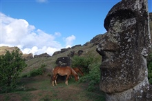 Horses nibbling away apparently unimpressed by moai archaeologicaltreasures at the Rano Raraku quarry.