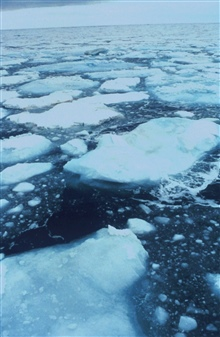 Ice floes in the northern Bering Sea