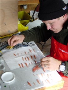 Scientist studying krill