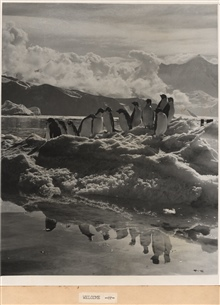 The welcome image for the report - Adelie penguins on an ice floe with theirreflection in calm waters.