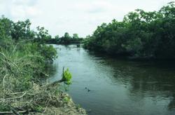 Black Bayous Hydrologic Restoration