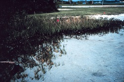 Tampa Bay Oil Spill - General Images